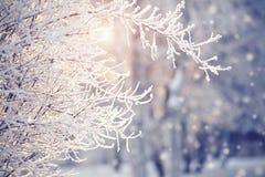 Filialer i rimfrost och insnöat vintern Arkivbilder