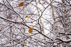 Filialer i snön royaltyfria foton