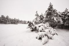 Filialer i snowen arkivfoton