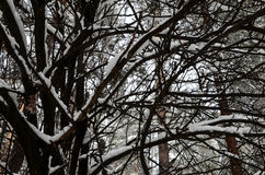 Filialer i vintern Arkivbilder