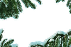 filialer inramniner gjort sörjer snow Fotografering för Bildbyråer