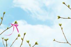 Filialer med gröna knoppar och rosa band på en bakgrund av blå himmel med moln, vår fotografering för bildbyråer