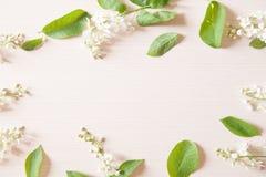 Filialer med mycket små vita blommor Royaltyfri Fotografi