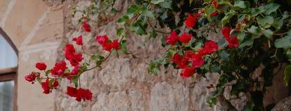 Filialer med röda blommor på stenväggen Royaltyfri Foto