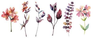 Filialer med sidor och blommor, blom- uppsättning royaltyfri illustrationer