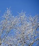 Filialer med snow Arkivfoton