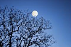 filialer moon vinter fotografering för bildbyråer