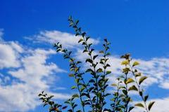 Filialer mot den blåa himlen någon blurr Arkivfoto