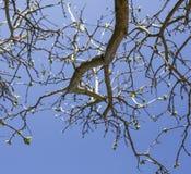 Filialer mot en blå himmel, solig dag royaltyfria foton
