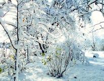 Filialer och buske under snön Royaltyfria Bilder
