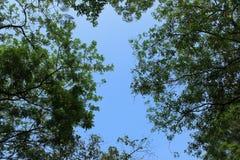 Filialer och sidor mot bakgrunden av himlen Arkivbild