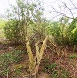 Filialer och trädnr Crookham Northumerland, England UK Arkivfoto