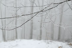 Filialer på dimmig dag Arkivfoton