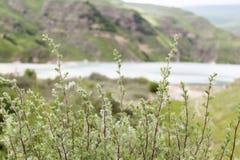Filialer på en bakgrund av sjön Royaltyfria Bilder