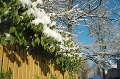 Filialer på vintern Royaltyfria Bilder