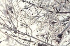 filialer räknade snow Royaltyfri Bild