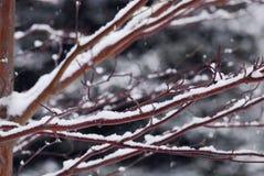 filialer räknade snow Royaltyfria Foton
