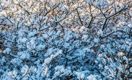 filialer räknade snow Arkivfoton