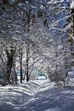 filialer räknade snowtrees Arkivbild