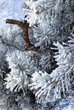 filialer sörjer treen arkivfoton