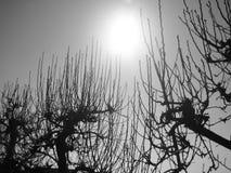 filialer silhouetted treen Fotografering för Bildbyråer