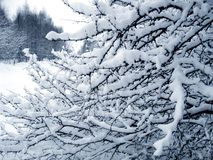 filialer snow under Arkivfoto