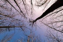 Filialer som fördjupa in mot den blåa himlen Arkivbild