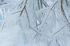 Filialer som frysas i vintern Royaltyfri Fotografi