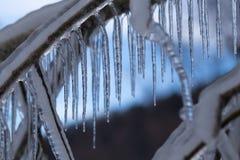 Filialer som frysas i vintern Royaltyfria Bilder