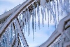 Filialer som frysas i vintern Royaltyfria Foton