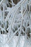 Filialer som frysas i vintern Fotografering för Bildbyråer