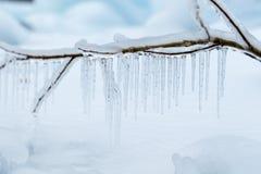 Filialer som frysas i vintern Royaltyfri Foto
