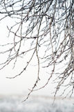 Filialer som täckas av rimfrost Royaltyfria Bilder