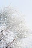 Filialer som täckas av rimfrost Royaltyfri Foto