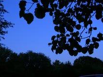 Filialer som trycker på himmel Royaltyfri Foto