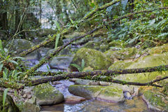 Filialer till och med en flodbana i El Yunque Arkivbilder