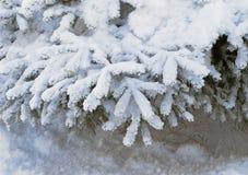 Filialerna av granträden under snön Arkivfoto