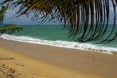 Filialerna av kokosnöten gömma i handflatan mot den klara blåa himlen Royaltyfri Fotografi