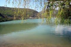 Filialerna av pilen ovanför dammet i Abrau-Durso Royaltyfria Foton