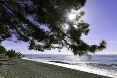 Filialerna av träden böjde över vid havsstranden Royaltyfri Fotografi