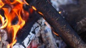 Filialerna bränner i branden stock video