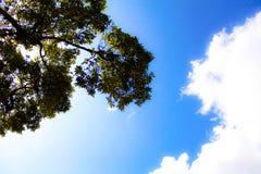 Filialerna och molnet Royaltyfri Bild