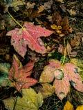 filialgreen låter vara saplings treen arkivfoton