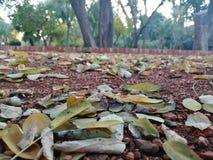 filialgreen låter vara saplings treen royaltyfri foto