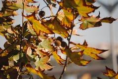filialgreen låter vara saplings treen Fotografering för Bildbyråer