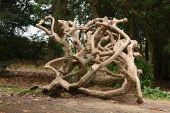 Filiali aggrovigliate di un albero guasto Fotografia Stock