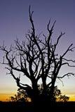 Filiali al tramonto Fotografia Stock Libera da Diritti
