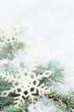 Filiali attillate dello Snowy fotografia stock