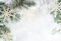 Filiali attillate dello Snowy immagini stock libere da diritti
