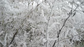 Filiali bianche congelate Paesaggio della foresta stock footage